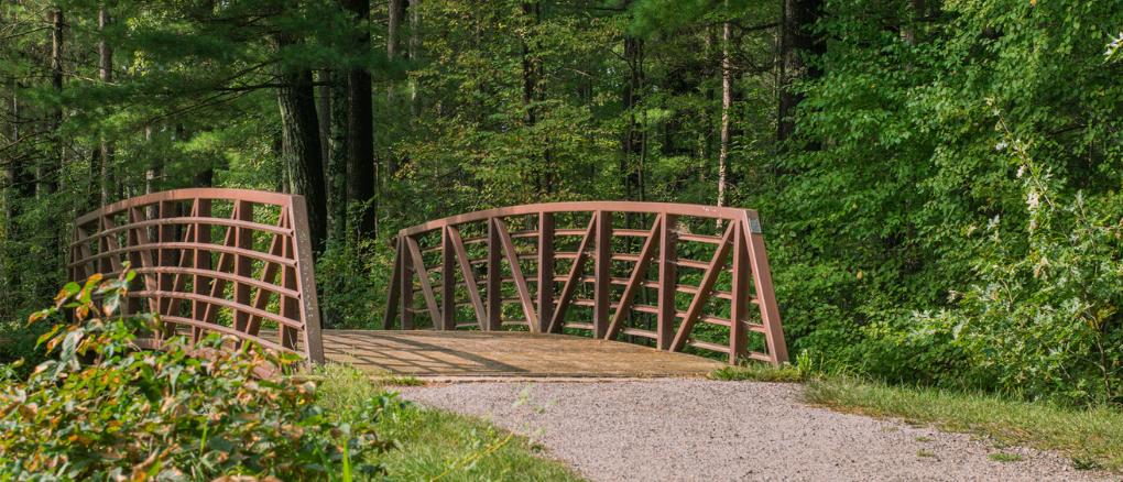 bridge with fall foliage